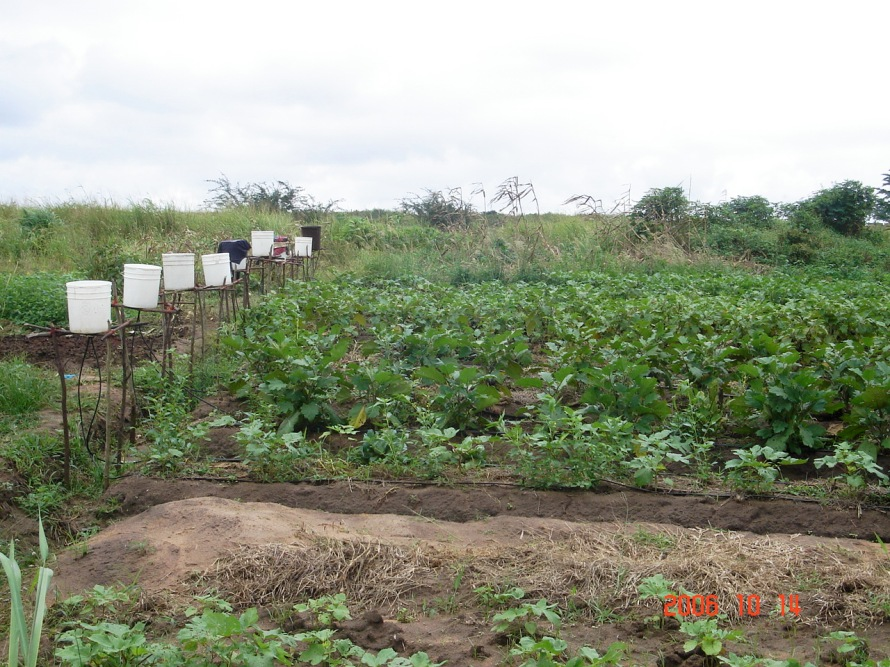 Survival Garden with Eggplant irrigated using Drip Irrigation Systems, Accra, Ghana, 2009