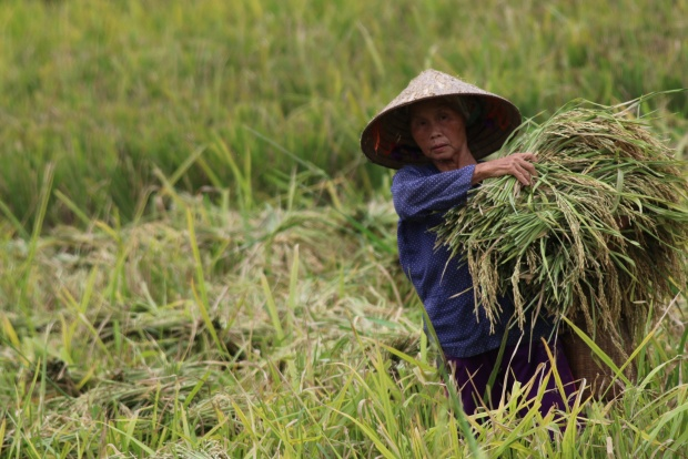 Moving closer to achieving climate-smart future for Southeast Asia